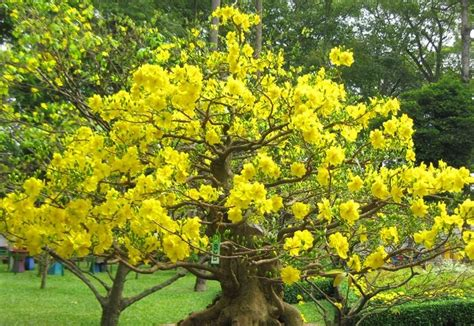 pretty tree with yellow flowers pictures photos and