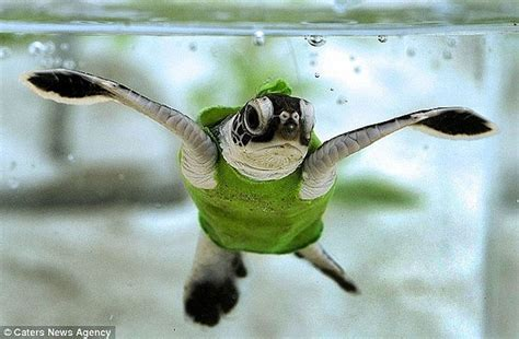 Cute Pictures Of Turtles   www.pixshark.com   Images