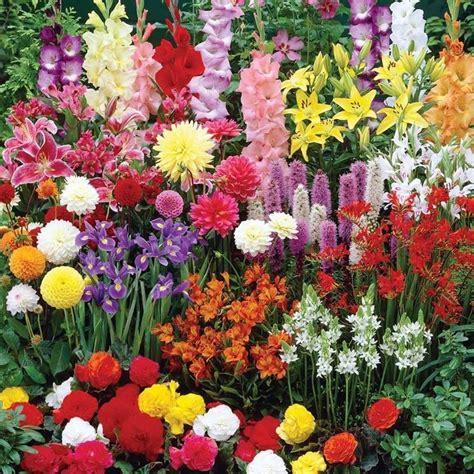 bulbi da fiore perenni bulbi da fiore bulbi bulbi da fiore per giardino