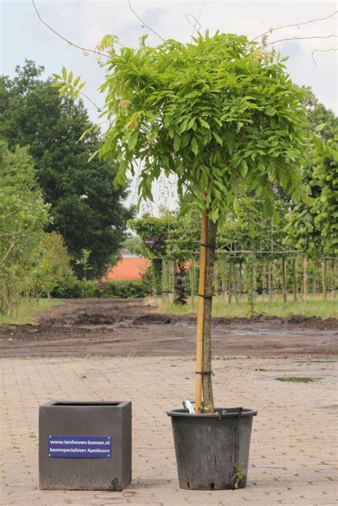 Bomen In Pot Op Terras by Kwaliteit Onze Bomen En Planten Ten Hoven