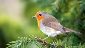 birds bird desktop beautiful wallpapers background 1485534