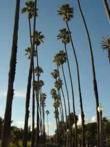 Santa monica palm tree sunset beach hd travel photos and wallpapers