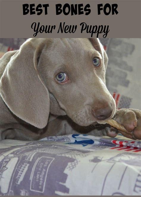 best bones for teething puppies the best bones for your puppy s teeth dogvills