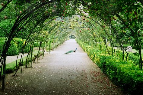 Garden Arbor Tunnel Wisteria Tunnel Japan Wisteria Tunnel The Peacock