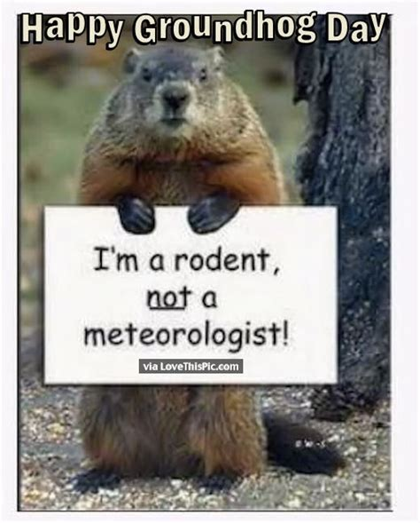 groundhog day lines happy groundhog day quote pictures photos and