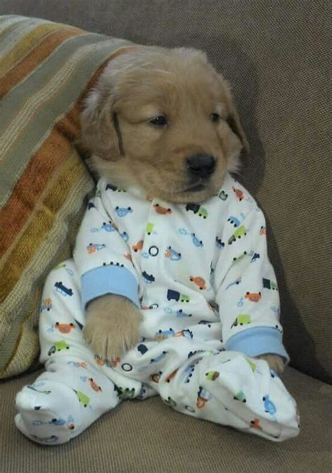 puppies in clothes best 25 dogs in clothes ideas on puppy clothes and animal