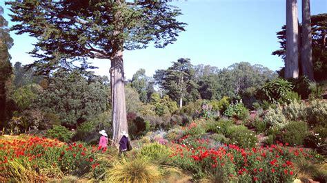 Botanic Gardens San Francisco Favorite Botanical Gardens Sunset