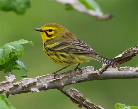 important bird migration habitat restored along virginia s