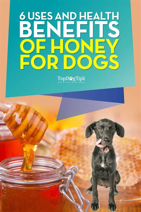 honey for dogs 6 uses and health benefits of honey for dogs top tips