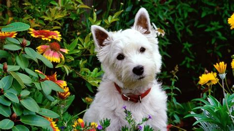 can dogs adhd 10 safe plants for dogs you can add to almost any garden right now rover