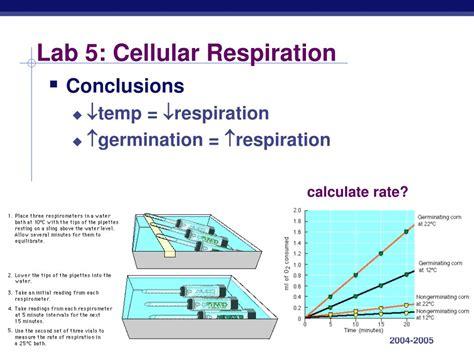 design lab on respiration ppt lab 3 mitosis meiosis powerpoint presentation