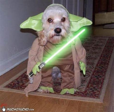 which breed looks the most like yoda quora which breed looks the most like yoda quora