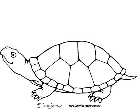 pond turtle coloring page pin pond life colouring pages on pinterest