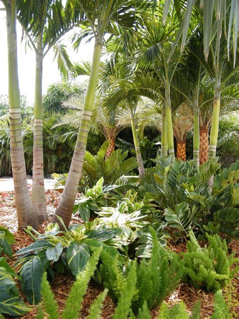 tropical trees for backyard 253 best groundcover ideas images on pinterest gardening