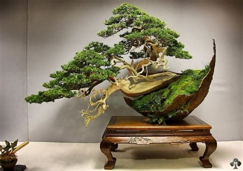 top  crazy  unusual bonsai trees bonsai empire