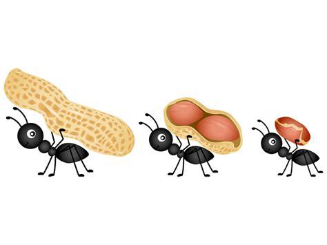 come debellare le formiche in casa come eliminare le formiche dalla cucina con metodi