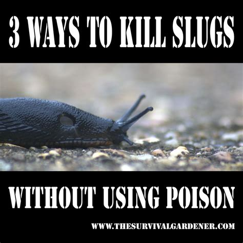 three easy ways to kill slugs in the garden without poison