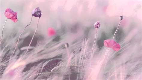background romantic 3 hours best relaxing music romantic piano