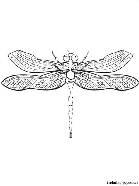 dragonfly mandala coloring pages dragonfly mandala coloring pages