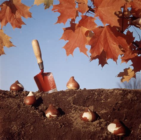 planting a garden in the fall when to plant bulbs help on bulb planting time garden