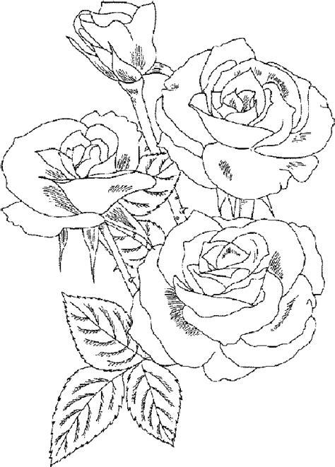 rose bush coloring page rose bush coloring pages coloring kids pinterest