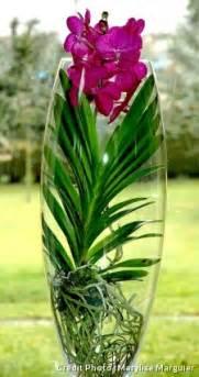 orchidee vanda orchidee vanda bleue entretien orchid 233 e