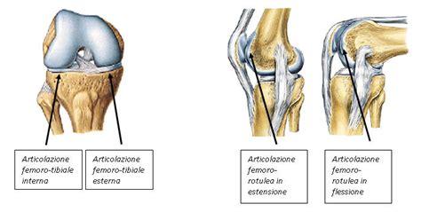 condilo femorale interno le lesioni cartilaginee femoro tibiali ginocchio