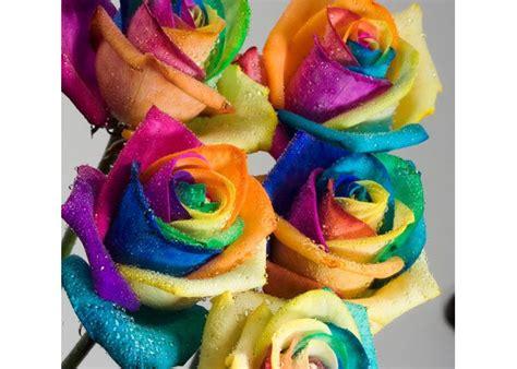 sognare fiori colorati le superstizioni pagina 2