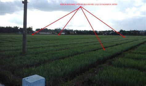 Jual Bibit Bawang Merah Nganjuk pusat jual beli bibit bawang merah unggul bibit bawang