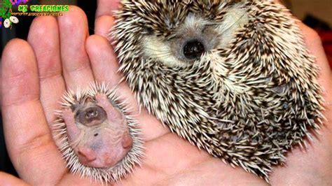 imagenes animales recien nacidos 191 como son las cr 237 as recien nacida de los animales parte 8
