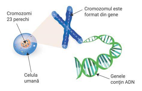 test genetica ce este consultaţia genetică synevo