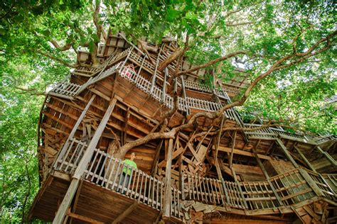 treehouse house world s largest treehouse for le monde david walter