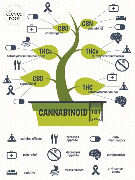 hemp cbd a primer on cannabinoids and cannabis medicine for better health books cannabinoids 101 the clever root