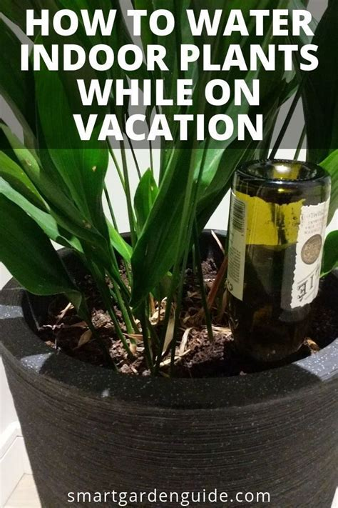 water indoor plants   vacation indoor