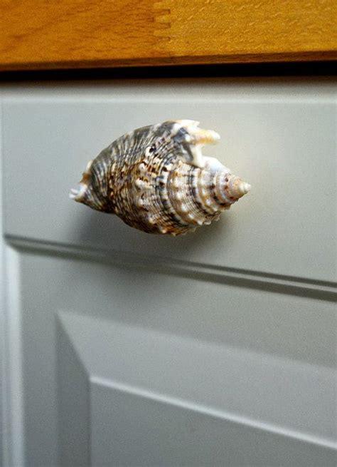 kitchen cabinet shells seashell cabinet knobs architecture jsmentors seashell