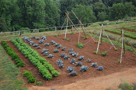 drawing up a vegetable garden plan gardening