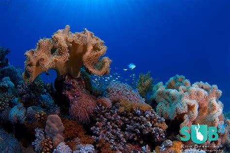 Underwater Garden by Composition In Underwater Photography Rule Of Thirds