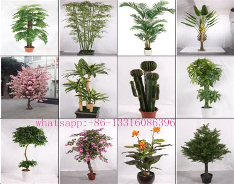 house plant types q082612 different types of plants and trees artificial