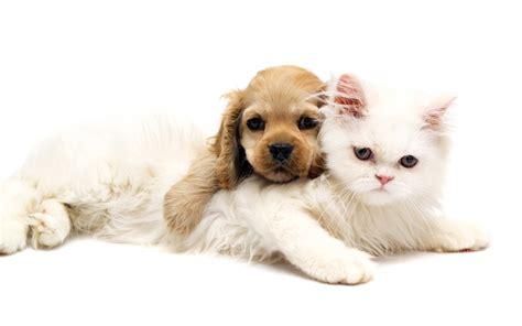 alimentazione gattini alimentazione di cuccioli e gattini