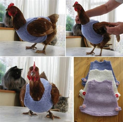 Backyard Chickens Yarn 195 Best Images About Cluck On