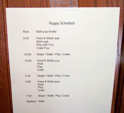 printable puppy schedule growing puppies virginia schnoodle breeder