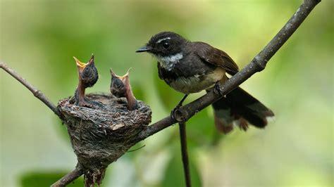 where do birds live reference com