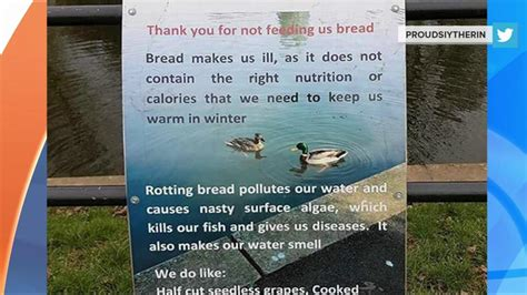 ducks to visitors thank you for not feeding us bread