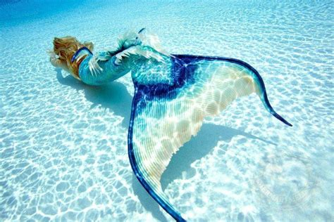 the mermaid s the sea inside the world of real mermaids