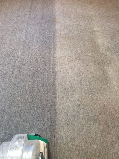 carpet rug upholstery cleaners auckland west shore