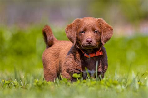 5 ways to puppy proof your backyard