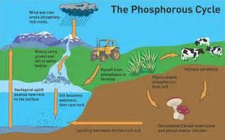 phosphorus color let s talk about phosphorus depletion oxford