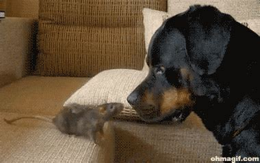 puppy gifs mouse bites s nose gifs and animated gifs