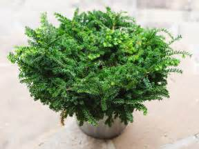 Winter Patio Plants Winter Friendly Patio Plants Landscaping Ideas And