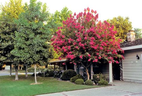 Best Shade Tree For Backyard by What Of Trees Are In Your Yard Room Decorating